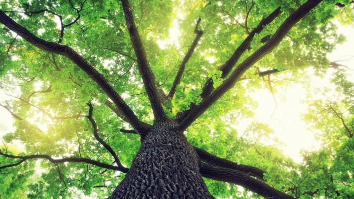 光り輝く木