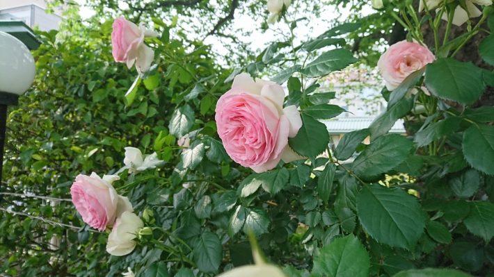 花の美しさは横からみて感じる